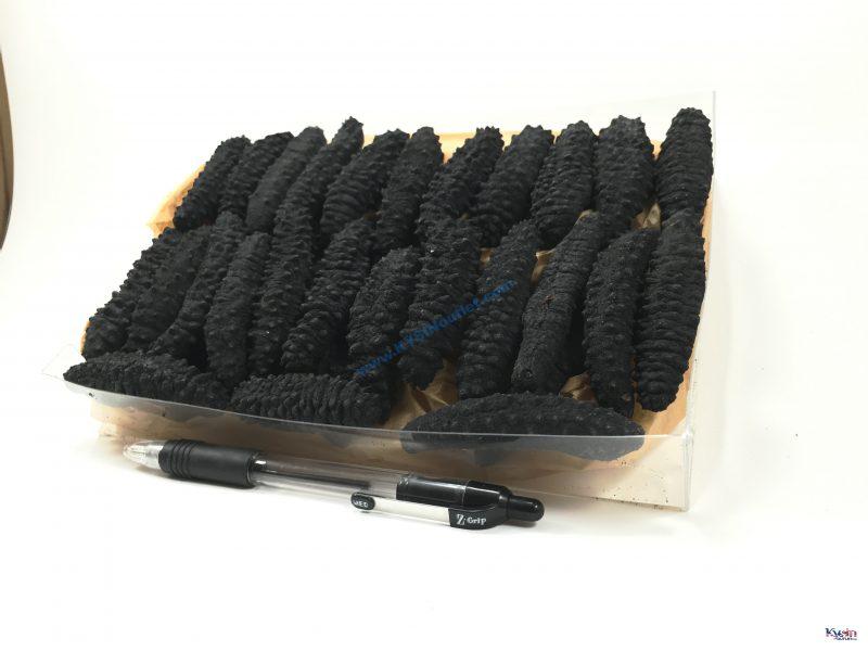 野生淡干 北极冰刺参/ 小黑刺/ 岩刺参 Wild Sea Cucumber Holothurian Mammata Black Spiky